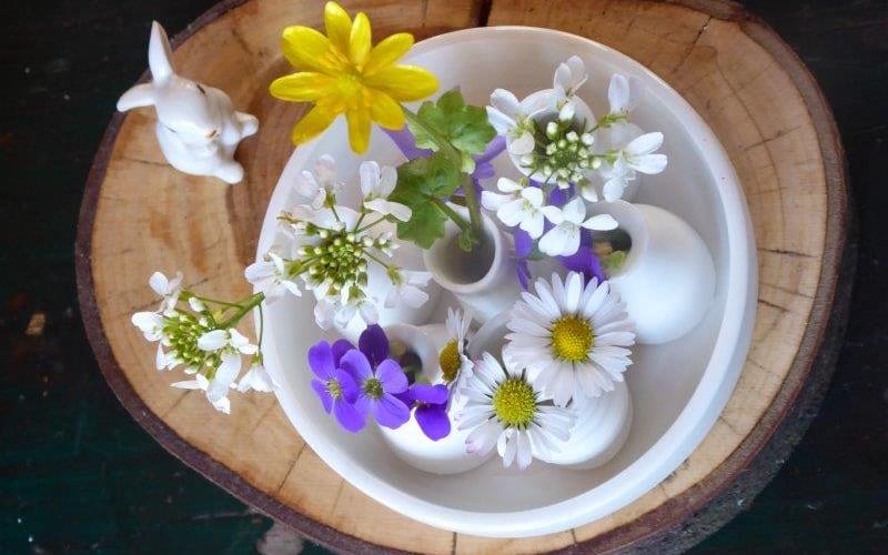 Kräuterkurs: Blühehende Heilmittel